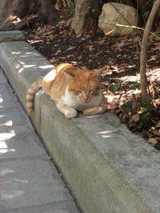 Katze Schatten Asklepieion