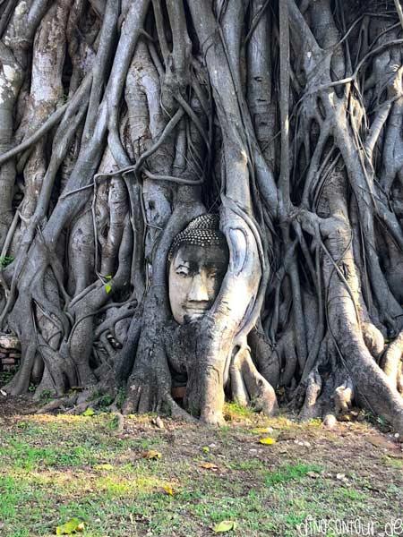 Buddha Kopf im Baum in Wat Mahathat