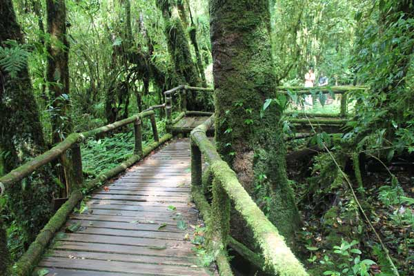 Pfad durch Cloud Forest Doi Inthanon