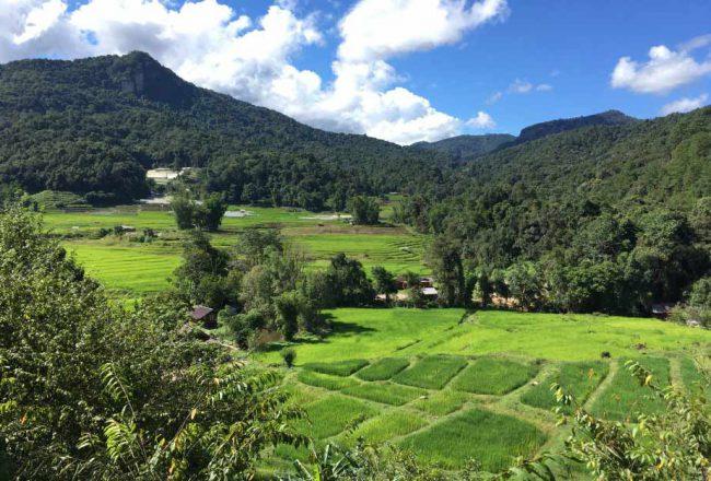 Reisfelder und Doi Inthanon im Nationalpark