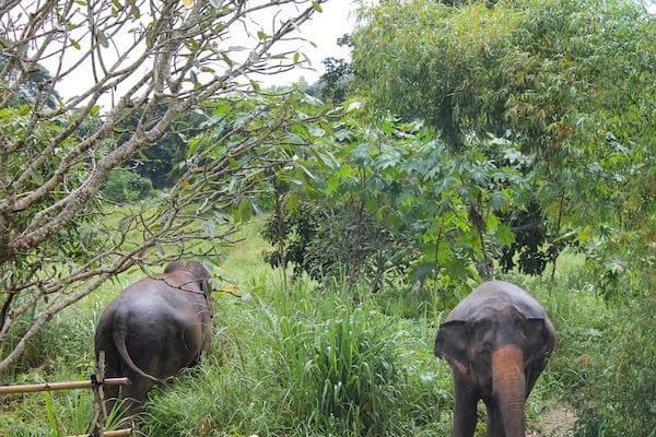 Elefanten im Dschungel in Chiang Mai