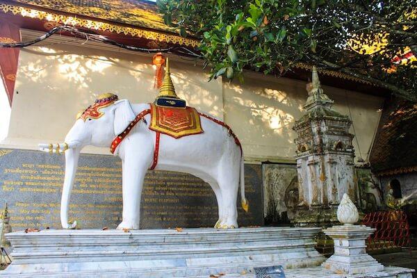 Weißer Elefant White Elephant Doi Suthep Chiang Mai