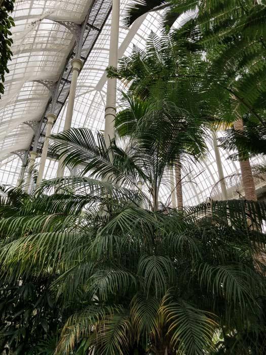 Palmenhaus von innen