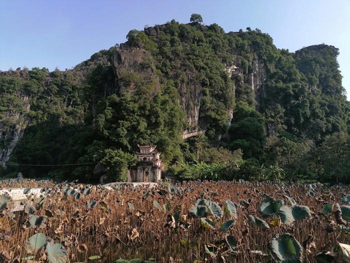 Lotusblumenfeld bei der Bich Dong Pagode in der Nähe von Tam Coc