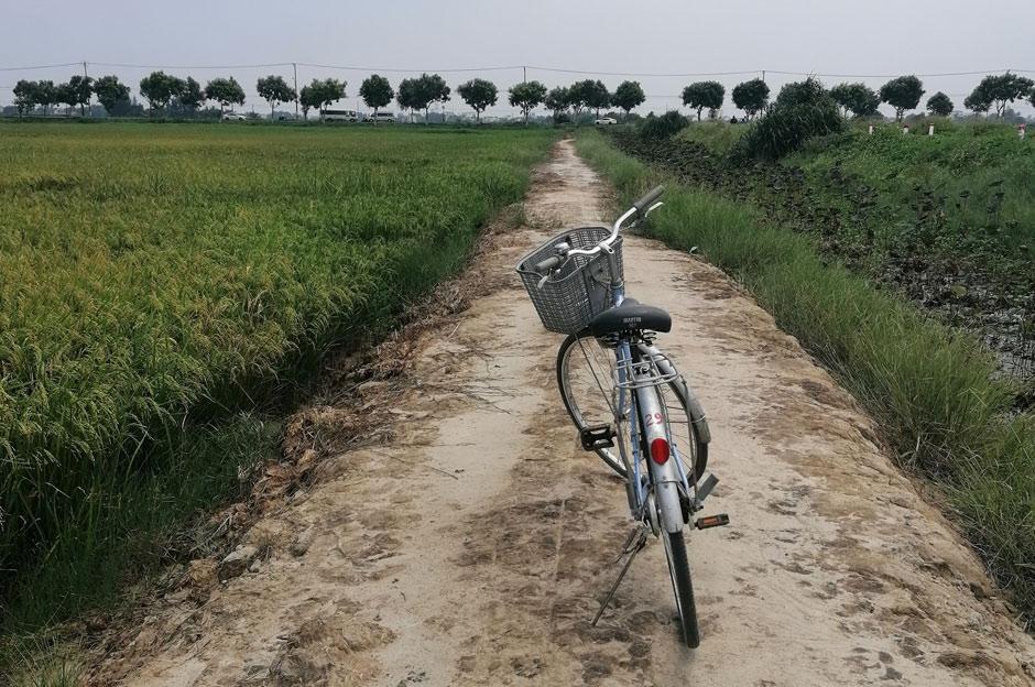 Fahrradtour durch Reisfeld bei Hoi An