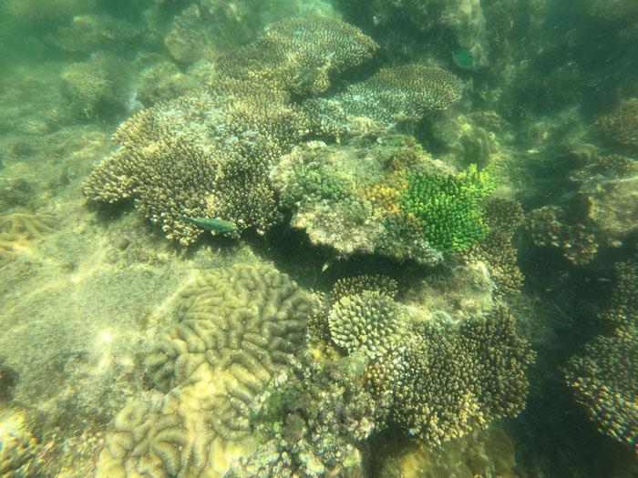 Schnorcheln Korallen