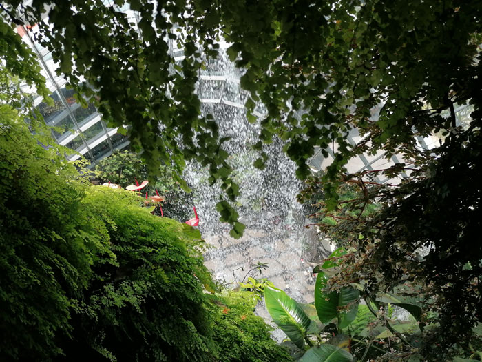 Wasserfall im Cloud Forest