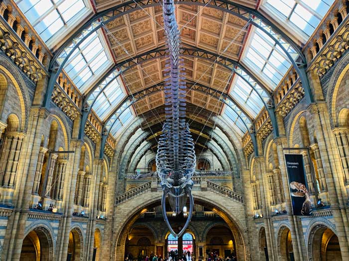 Hintze Hall Haupthalle Natural History Museum