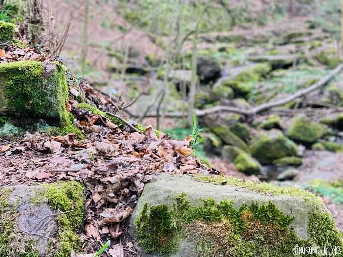Einstieg in die Somsdorfer Klamm mit vielen Felsen