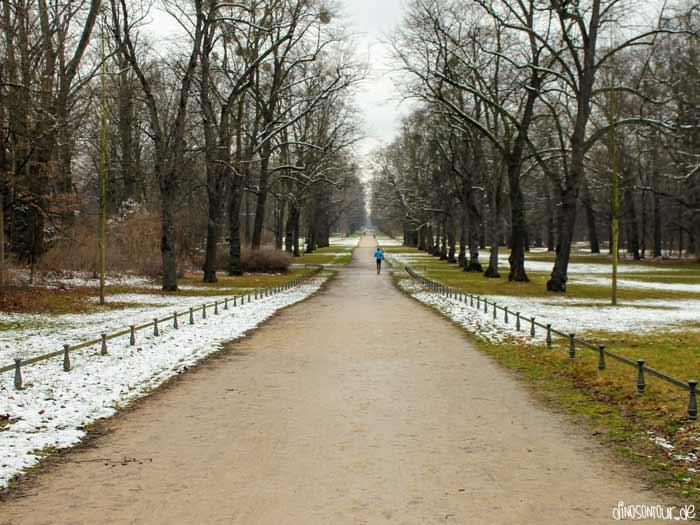 Joggen im Großen Garten im Winter
