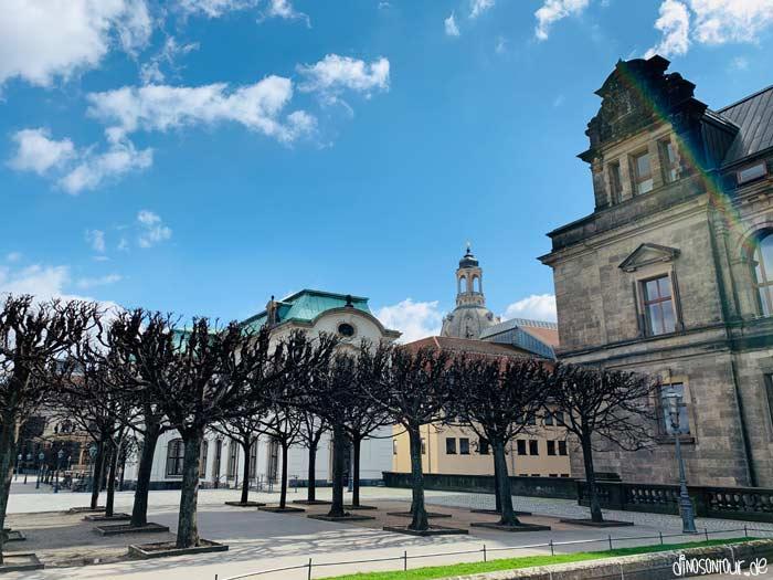 Lindenbäume auf der Brühlschen Terrasse