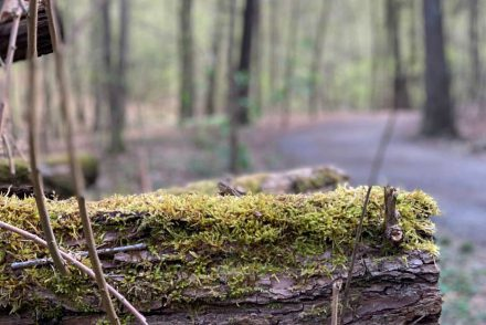 Natur im Prießnitzgrund in Dresden