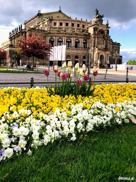 Semperoper Dresden mit Blumen