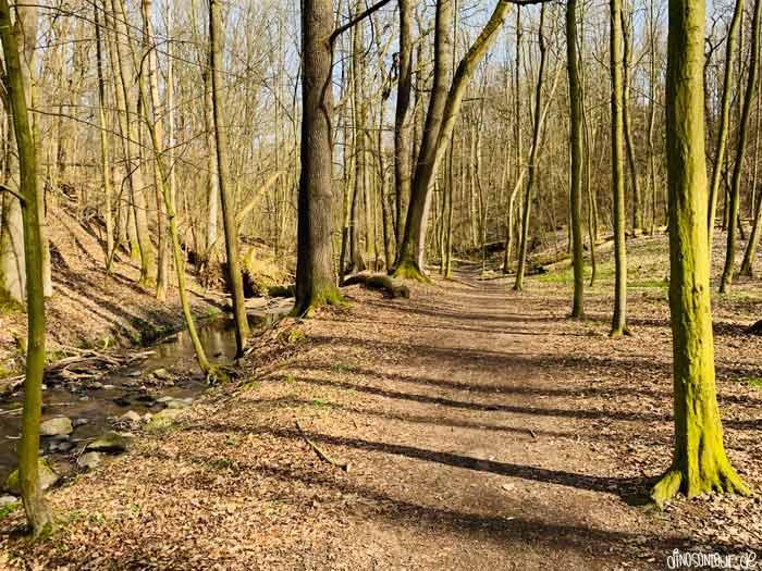 Wanderweg neben dem Zschonerbach