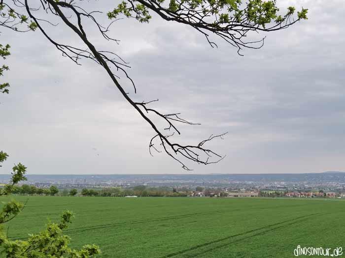 Babisnauer Pappel Blick auf Dresden