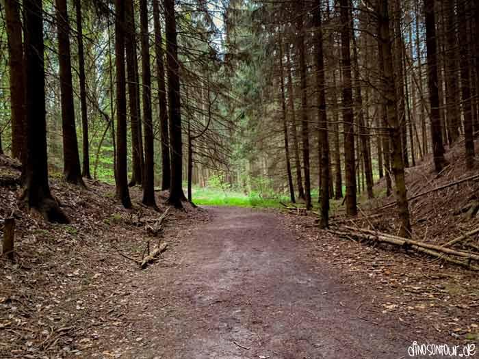 Waldweg zum kleinen Bärenstein