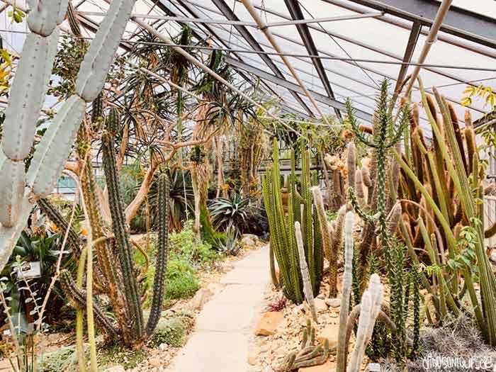 Tropenhaus im Botanischen Garten