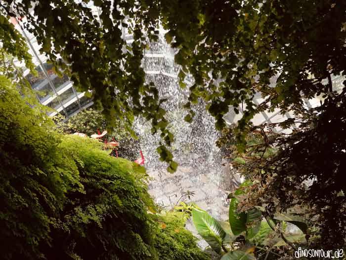 Wasserfall im Cloud Forest