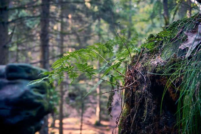 Kleine Pflanze am Felsen