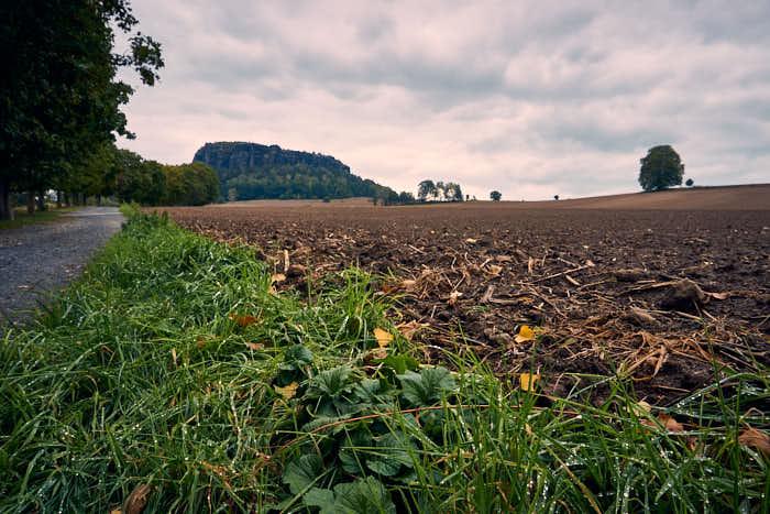 Feldweg beim Pfaffenstein