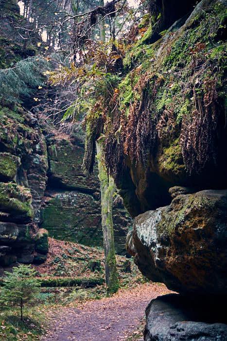 Felsen im Uttewalder Grund