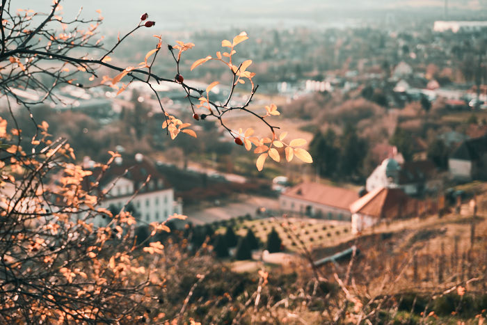 Weinberg Terrassen mit Schloss Wackerbarth