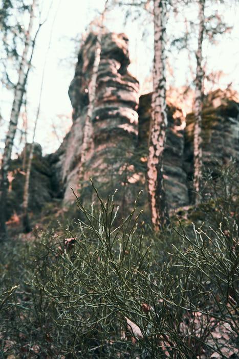 Natur Impression am Kleinen Kuhstall