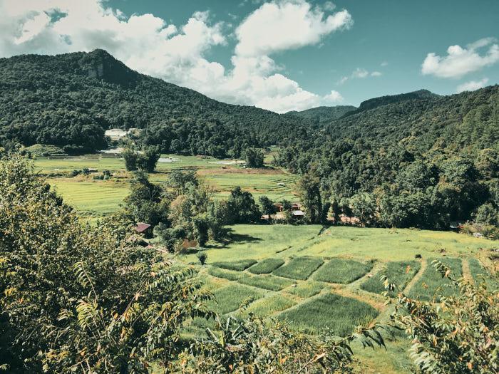 Reisfelder Doi Inthanon Thailand