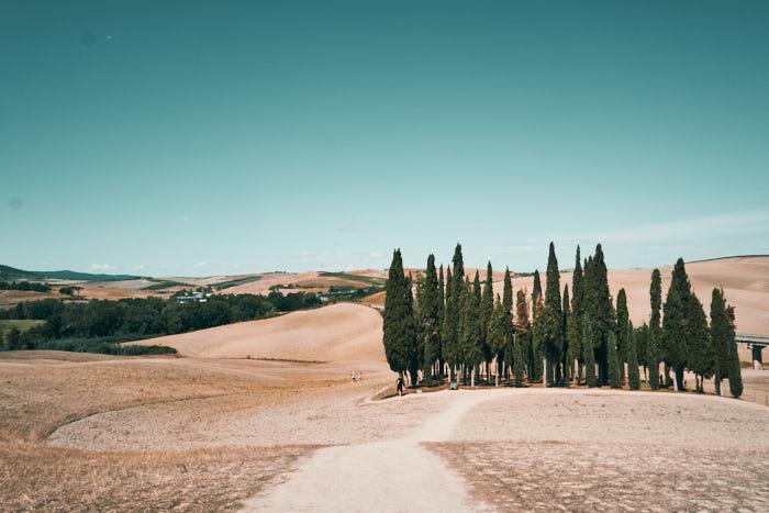 Cipressi San Quirico Dorcia